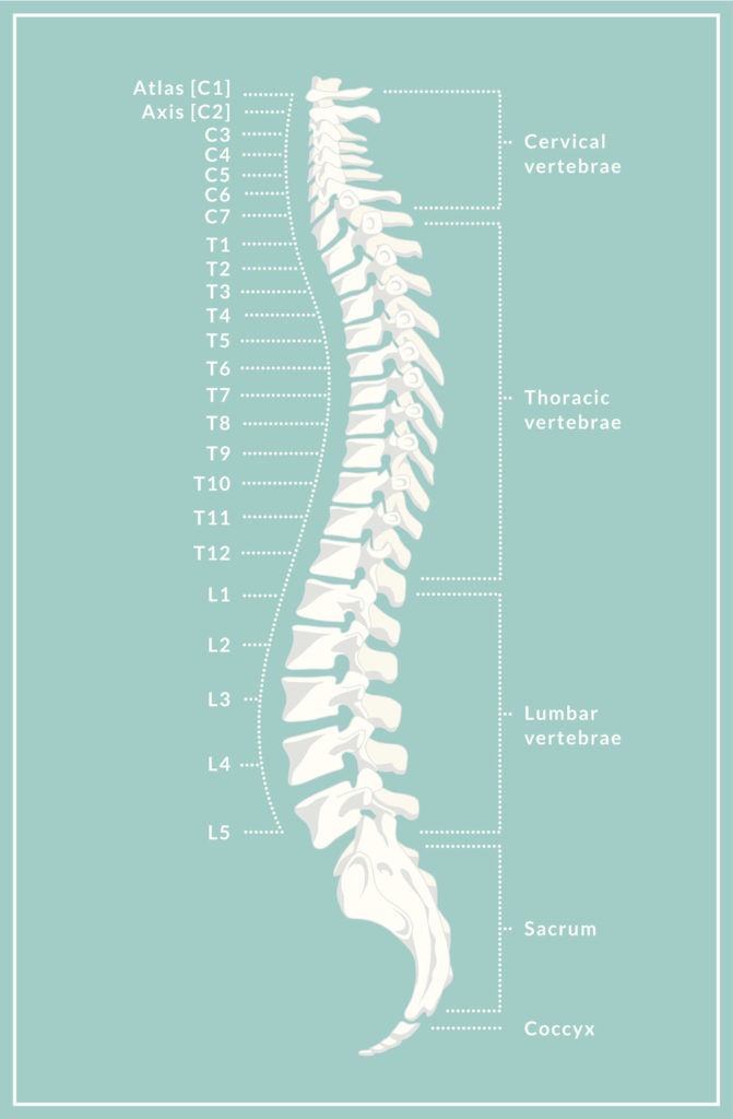 Spinal Anatomy Overview Atlanta Brain And Spine Care